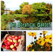 tour of the botanical garden in copenhagen denmark youtube