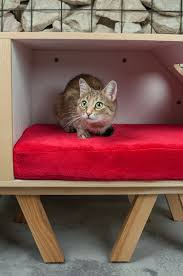 a multi functional piece of furniture for you and your pet