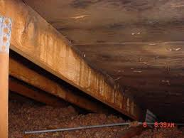 how to prevent attic mold from growing if it u0027s not too late