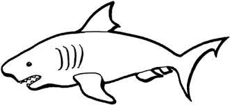 Australian Shark Coloring Page Free Printable Coloring Pages Coloring Pages Sharks Printable