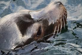 California Wildlife Tours images Whales wildlife beachcomber ocean tours ucluelet jpg