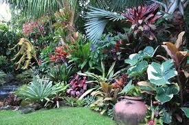 Tropical Gardening Ideas Tropical Landscaping Ideas Search A Wellness Center