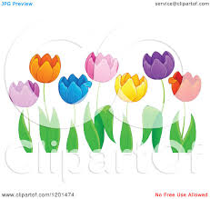 cartoon of colorful tulip flowers and green leaves 2 royalty