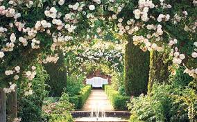 heaven scent the best roses for your garden telegraph
