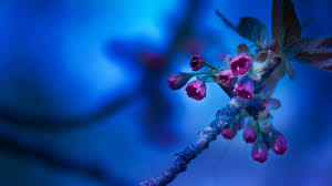 Pretty Blue Wallpapers by Beautiful Pretty Bouquet Pink Roses Flower Hd Wallpaper For