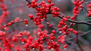 fruits red berries in nature desktop background wallpaper 1080p