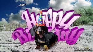 Happy Birthday Dog Meme - teckel dog dachshund for her happy birthday youtube