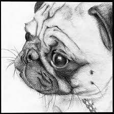 how pawsome is this pug sketch www jointhepugs com