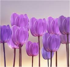 255 best colors purple images on pinterest plum blue and and