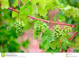garden design garden design with climbing vines stock images