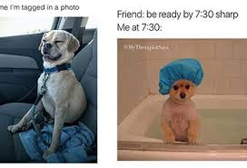 Animal Memes - animal memes archives funnymemes4u