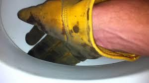 Eljer Patriot Toilet Bat In The Toilet Youtube
