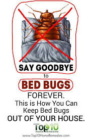 Bed Bugs How Do You Get Them Best 25 Bed Bug Remedies Ideas On Pinterest Bed Bug Spray Bed