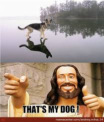 that s my dog by andrey mihai 14 meme center