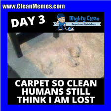 Memes Clean - pin by clean memes on clean memes pinterest memes and humour
