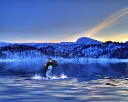 wildlife u0026 animals in norway norway travel guide