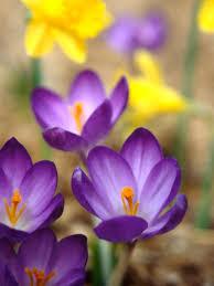 spring flower plan your spring garden hgtv