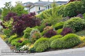 Small Shrubs For Front Yard - garden design garden design with grasses shrubs uamp small trees