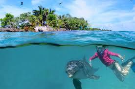 dolphin swim u0026 snorkel anthony u0027s key resort roatan honduras