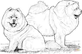 chow chow dogs coloring free printable coloring pages