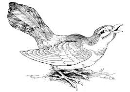 119 dessins de coloriage oiseau à imprimer sur laguerche com page 6