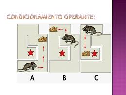 conductismo animal power point conductismo