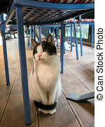 Cat Under Chair Cat Under The Table Cat Hiding Under The Table Pictures Search