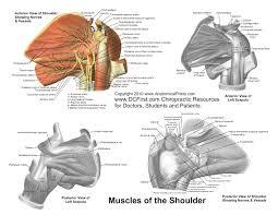 anatomy reference printable hnadouts