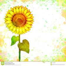 sunflower drawing royalty free stock photos image 7400108