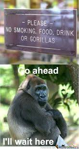 Gorilla Memes - gay gorillas are cool memes best collection of funny gay gorillas