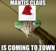 Mantis Meme - you know you want to check out this preying mantis meme dump