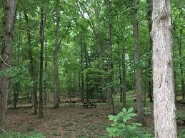 pr wm forest park on twitter