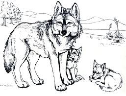 printable coloring pages wolf