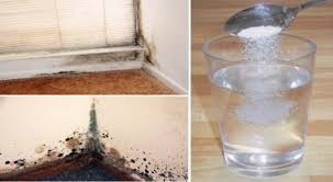 How To Get Rid Of Black Mold In Bathroom How To Get Rid Of Mold In Bathroom