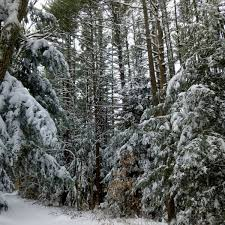 winter has arrived new hampshire garden solutions