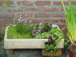 rock garden plants in garden tubs and containers one of the great