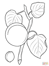 apricot branch and seed coloring page free printable coloring pages