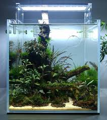 Aquarium Aquascaping 17 Best Iwagumi Aquascaping Style Tag Images On Pinterest