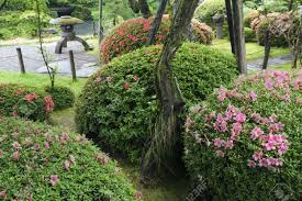 japanese zen garden with blossom azalea bushes by summer stock