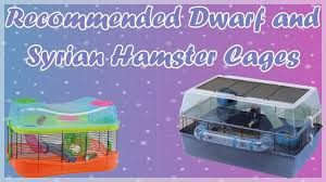 Hamster Cages Cheap Recommended Dwarf And Syrian Hamster Cages Youtube
