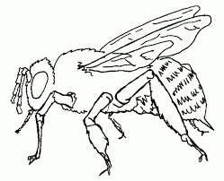 honey bee coloring pages with regard to motivate in coloring