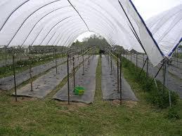 trellising peregrine farm