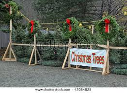 christmas tree sale christmas trees sale stock photo 42064825