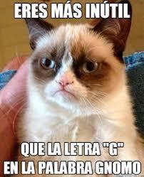 imagenes groseras de gatos memes del negro pensante recopilación humor memes and grumpy cat
