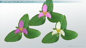 genetic modification definition advantages u0026 disadvantages