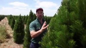 melbourne christmas tree farm youtube