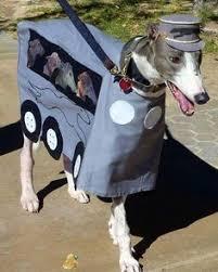 Funny Halloween Animal Costumes 57 Greatest Pet Costumes Halloween Costumes