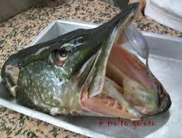 cuisiner du brochet produits de la pêche è molto goloso