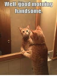 Good Morning Cat Meme - good morning wishes with cat pictures images photos