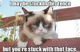 Frown Cat Meme - 10 new grumpy cat memes